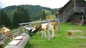Der kleine Ochse Konrad gesellt sich zu Lana, die in einer Hängematte auf der Alm liegt.