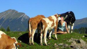 Lana sitzt auf der Almwiese und ist von Rindern umringt. Sie küsst Ochse Konrad.