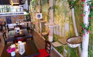 Tische und Kratzbäume im gemütlichen Katzencafé.