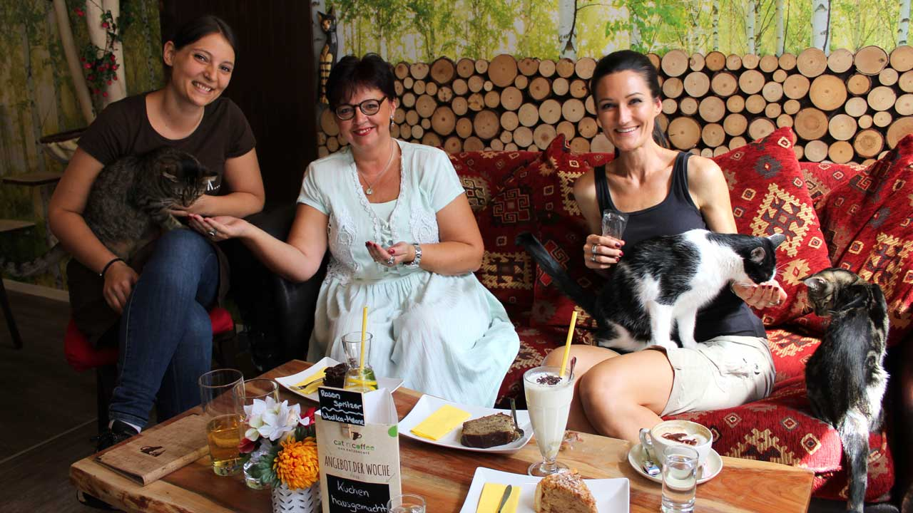 Lana sitzt mit der Besitzerin des Katzencafés und ihrer Mutter auf der Couch im Café und alle drei füttern Katzen.