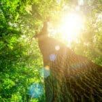 Natur - Pure Medizin für Körper und Psyche