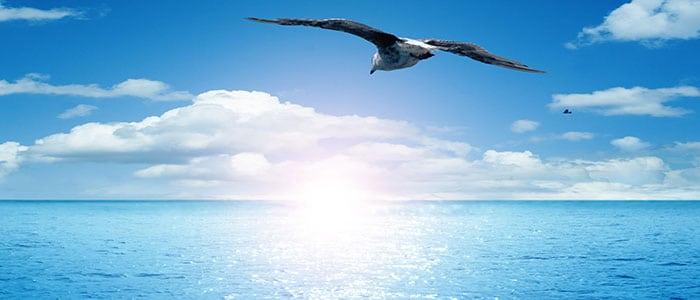 Leitfaden zur Selbstreflexion - Eine Möwe über dem Meer