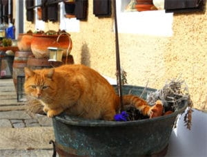 Katze im Hof vom Biolandgut Tiefleiten