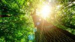 Natur – Pure Medizin für Körper und Psyche